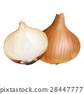 onion, vegetable, isolated 28447777