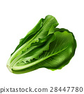 lettuce, vegetable, isolated 28447780