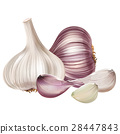 garlic, vegetable, isolated 28447843