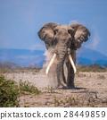 old elephant 28449859