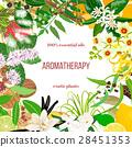 Big set of essential oil exotic plants. Ornament  28451353