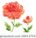 插圖 插畫 花朵 28453754