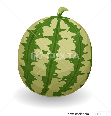 Watermelon 28456026