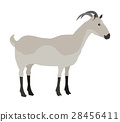 Farm Pet Goat 28456411