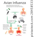 Avian Influenza.Virus Bird, Vector, Illustration. 28458533