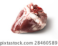 Raw sheep heart isolated on a white background 28460589