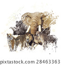 animal wildlife watercolor 28463363