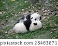 panda, pandas, baby 28463871
