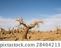 死的 樹木 樹 28464213