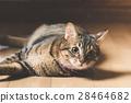 猫 猫咪 小猫 28464682