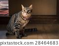 猫 猫咪 小猫 28464683