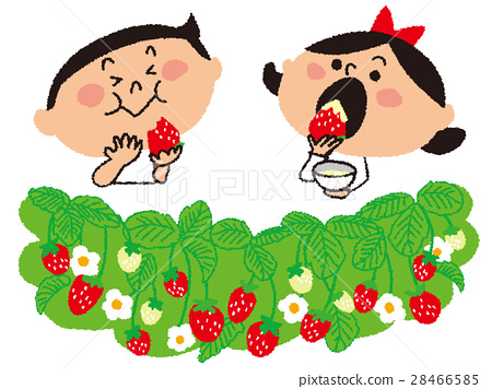 strawberry picking, strawberries, strawberry 28466585