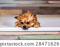 portrait wet dog in the shower bath 28471626