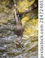 otter swimming 28472465