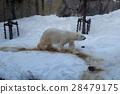 polar, bear, animal 28479175