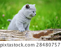 Close gray kitten on tree 28480757