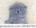 แมว,สัตว์,สัตว์ต่างๆ 28480764