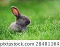 Rabbit 28481164