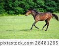 Horse 28481295