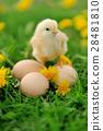 Little chicken on the grass 28481810