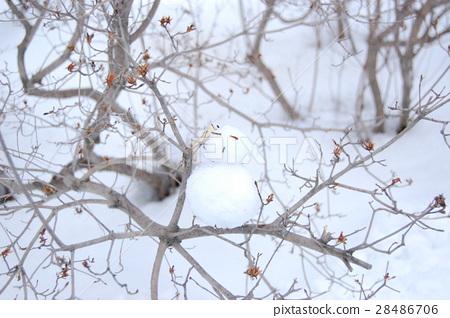 樹上小雪人 28486706