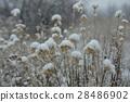 snow scene, snowflakes, snow 28486902