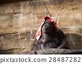 猩猩 女性 雌 28487282