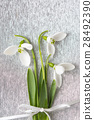 Snowdrops bouquet on shiny silver background 28492390
