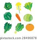 vegetables, vegetable, cabbage 28496878