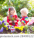 Kids plant and water flowers in spring garden 28499122
