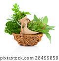Fresh herbs oregano, rosemary, parsley and sage 28499859