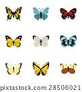 生物 蝴蝶 ICON 28506021