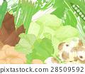 봄 야채, 봄 채소, 봄의 미각 28509592
