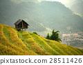 เวียดนาม,ข้าว,พื้นหญ้า 28511426