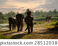 mahouts and elephants 28512038