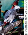 Parrot, lovely bird, animal and pet 28513904