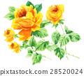 bloom, blossom, blossoms 28520024