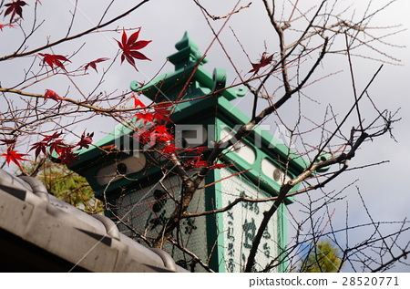 日本/京都/楓葉/清水寺 28520771