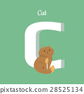 Cat with Letter C Isolated. Domestic Kitten. ABC 28525134