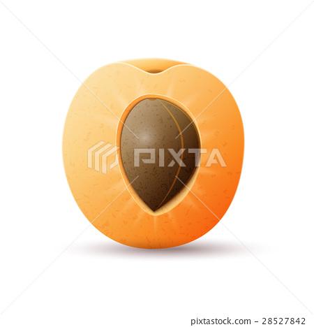 Half apricot fruit 28527842