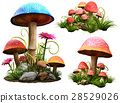 Mushrooms 28529026