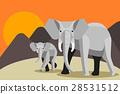 動物 大象 日落 28531512