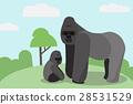 動物 大猩猩 野生動物 28531529