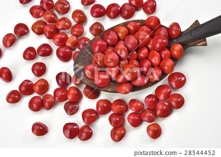 相思豆 種子 相思樹 28544452
