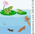 metamorphosis, toad, egg 28547319