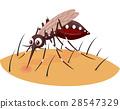 Mosquito cartoon sucking blood from human skin 28547329