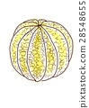 Grapefruit peeling 28548655