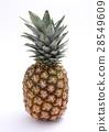 파인애플, 과일, 후르츠 28549609