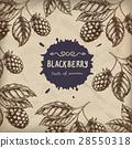Blackberry Raspberry design template. Blackberry 28550318