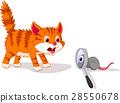 cat mouse magnify 28550678